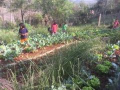 27-Gemüseanlage-Indigenadorf